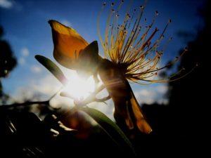 flower-211665_640