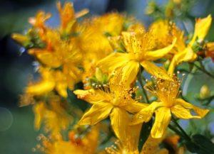 flower-374510_640