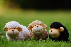 sheep-1642874_640