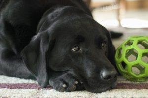 dog-862941_640