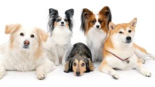 Pet counseling